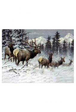 Colorado Elk - Kunstkarte 14 cm x 18 cm