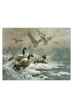 Winter Retreat, Canada Geese - Kunstkarte 14 cm ..